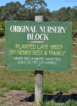 Bests Nursery Block at their vineyard in Great Western