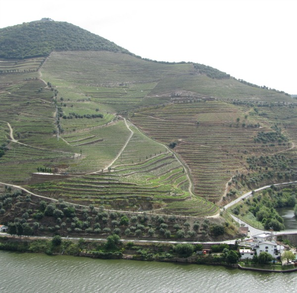 Terraced vineyards on Douro River in Portugal, the Home of Touriga Nacional