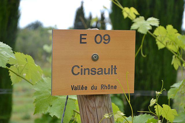 Cinsault red wine variety