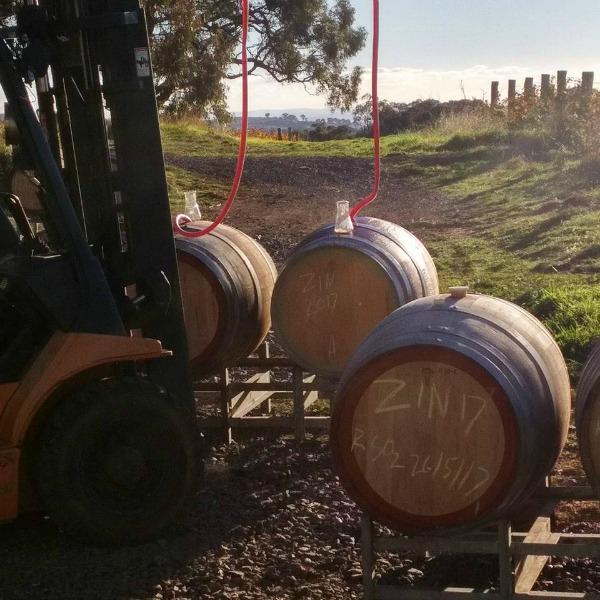 ZInfandel going into barrels
