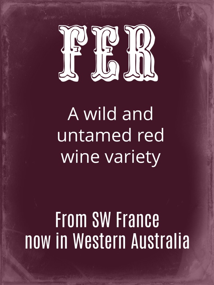 Fer red wine variety from South West France, now found in Western Australia