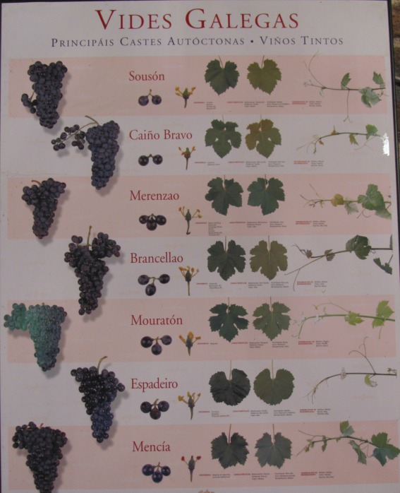 Red Wine varieties comonly used in the Galicia region of Spain.
