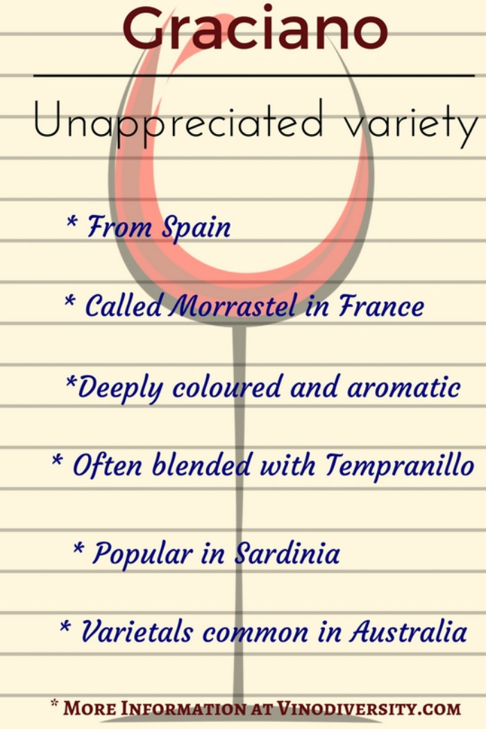 Graciano red wine grape variety