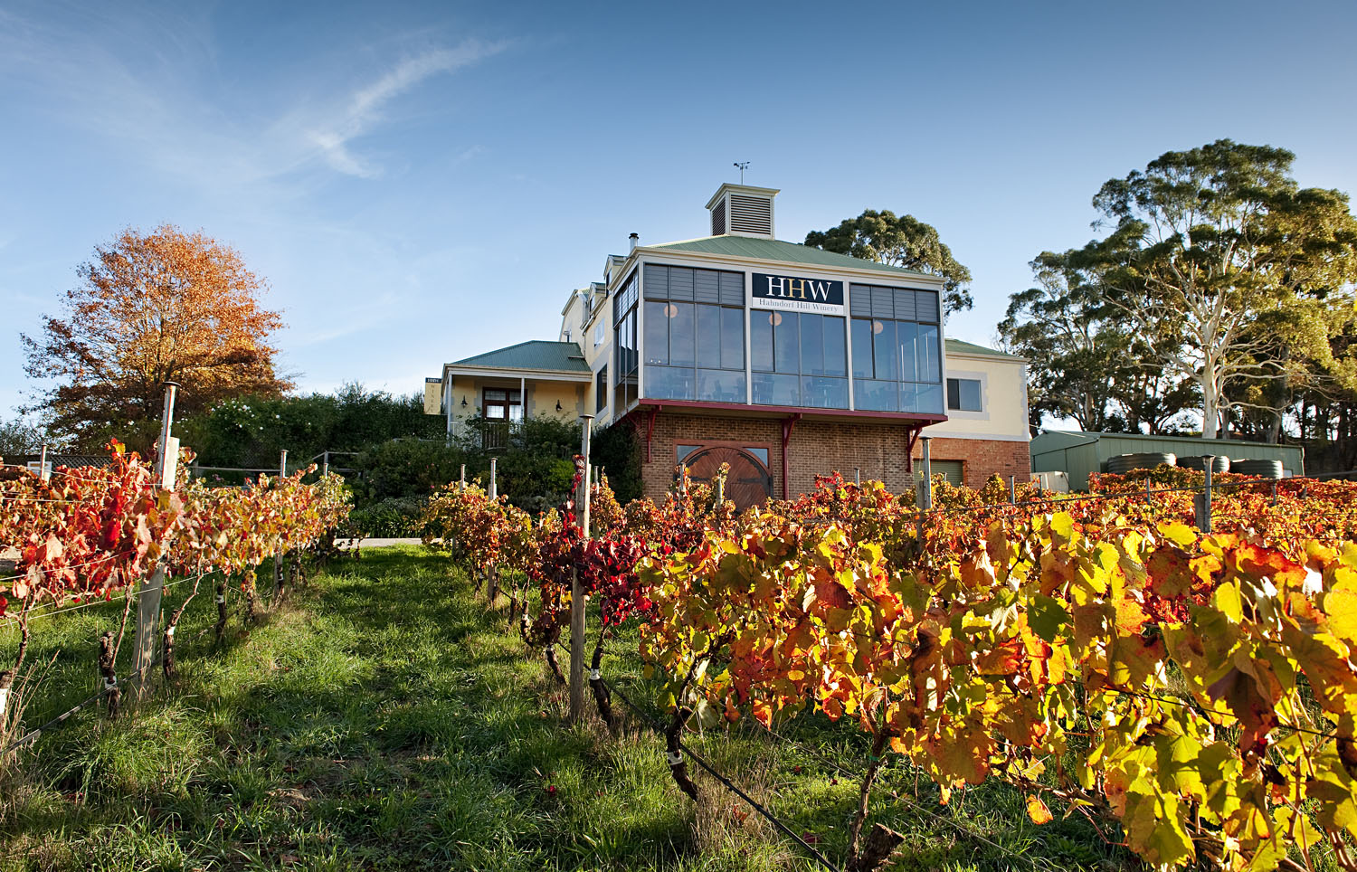 Blaufrankisch vines at Hahndorf Hill WInery