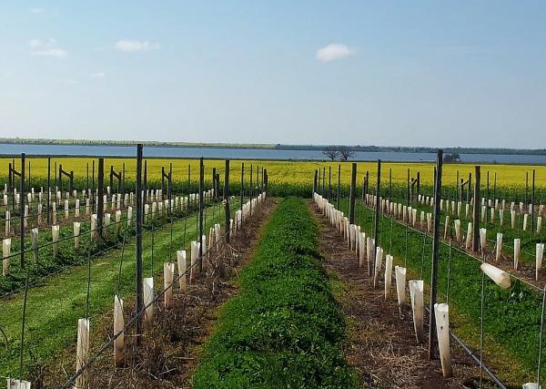 Carmenere vines oat Humis wines in the Heathcote Wine Region