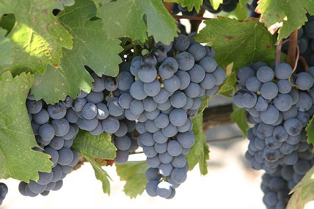 Malbec Red Wine Variety