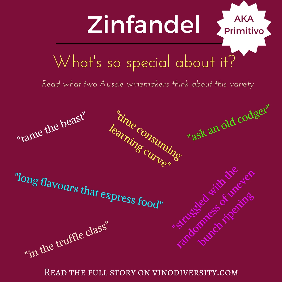Winemakers comments about zinfandel