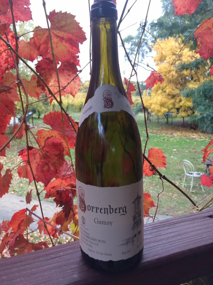 Sorrenberg Gamay is widely regarded as the best example of this variety in Australia
