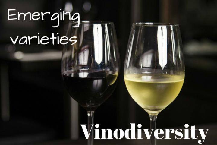vinodiversity wine info. Australian emerging wines