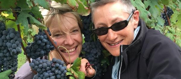 Nebbiolo grapes and vignerons  at Virago Wines Beechworth wine region NE Victoria