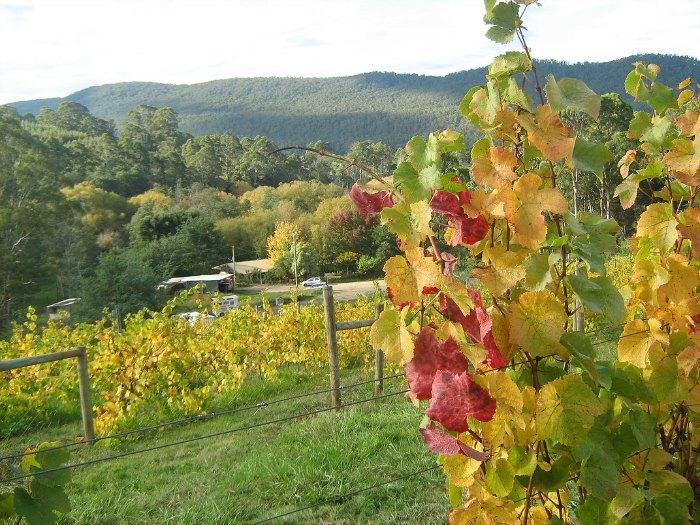 white rock vineyard in Northern Tasmania