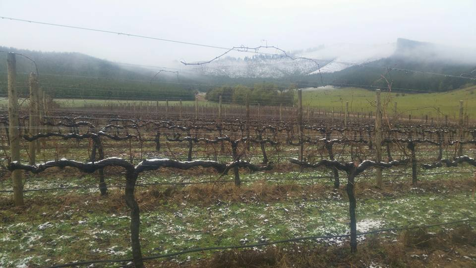Alpine Valleys wine region