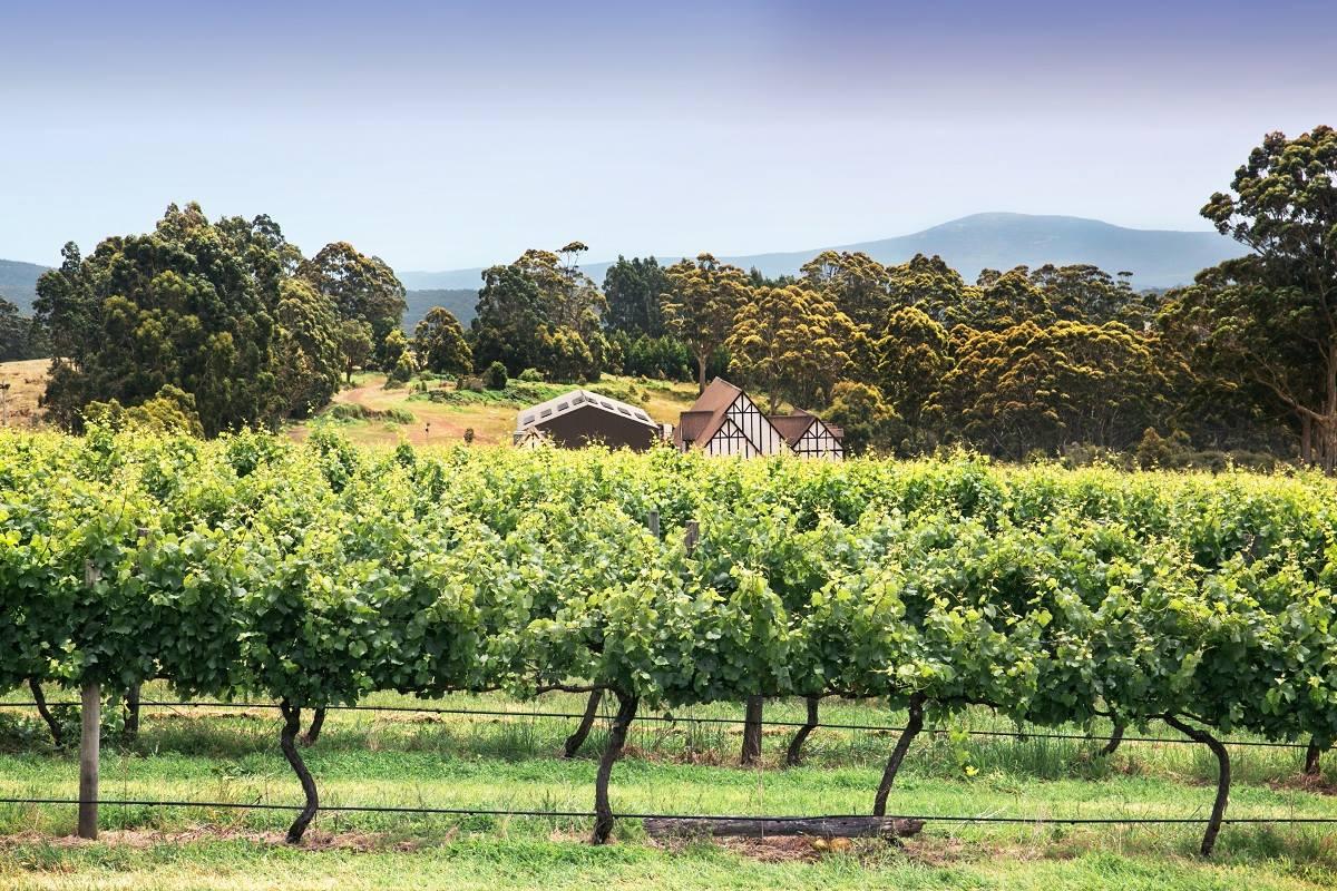 Castelli Wines Denmark, in the Great Southern Wine Region, Western Australia