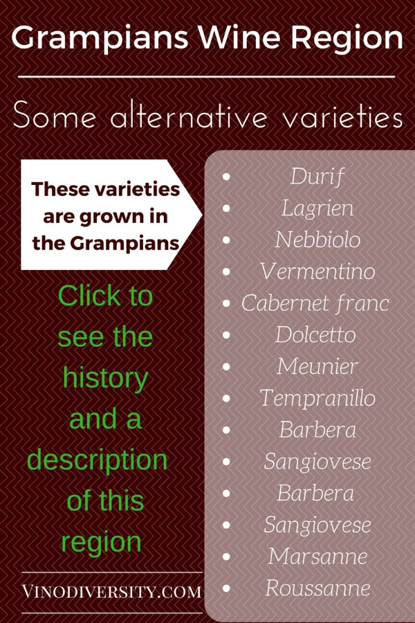 Alternative wine grape varieties found in the Grampians Wine Region