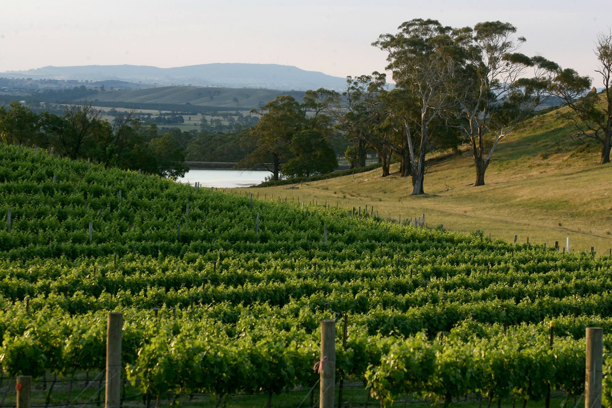View over the vines at Granite Hills Winery in the Macedon Ranges Region