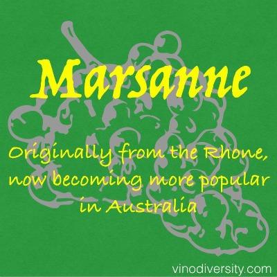 Marsanne wine grape variety