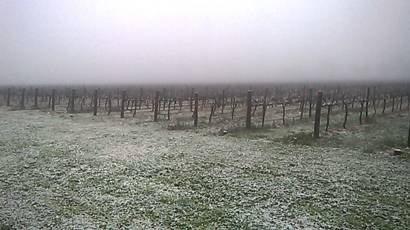 A light dusting of snow in this winter scene at Monument Vineyard