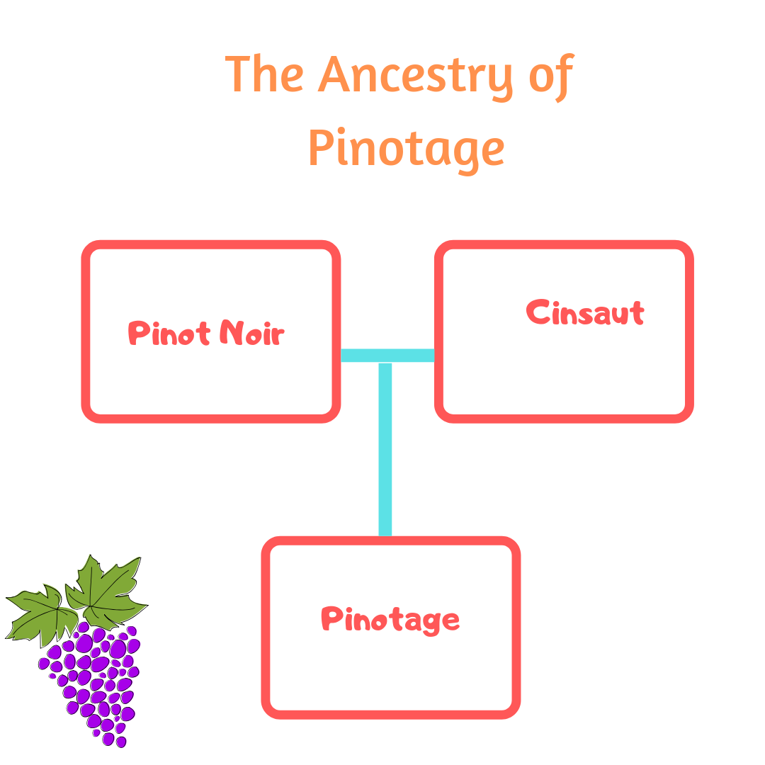 Pinotage is cross between Pinot Noir and Cinsaut