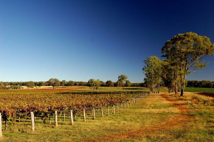 Toppers Mountain Wine Region