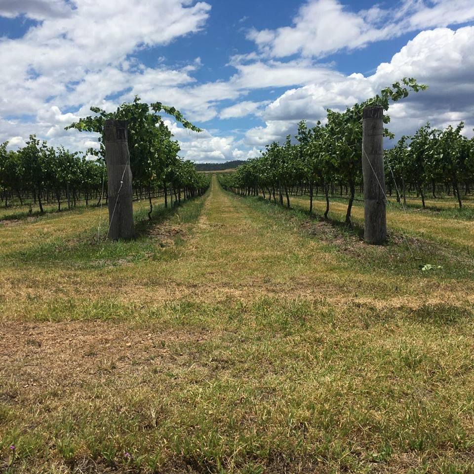 Zappa wines In the New England Wine region